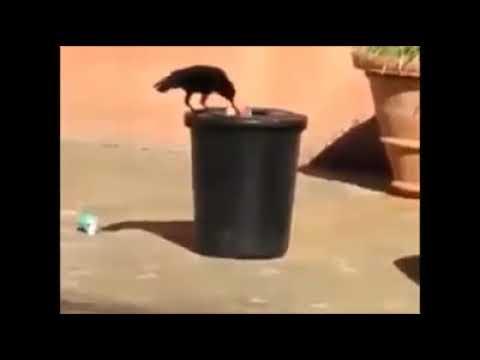देखिए ऐसे भी पशु पक्षी होते हैं हमारे इंडिया मे यह सबूत है इनके भारतीय सच्चे होने का