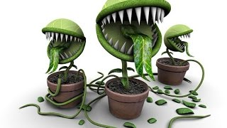 ОПАСНЫЕ ДЛЯ ЗДОРОВЬЯ комнатные растения