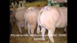 concours animaux de boucherie Montluçon 2015