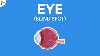 Physics - What is the Blind Spot of the Eye? - CBSE Class 8