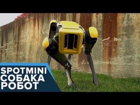 The New SpotMini -  Собака-Робот НЕВЕРОЯТНО!