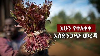 Check Out Ethiopian News, New Ethiopian Musics, Ethiopian Comedy an...