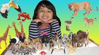 Learn Wild Animals with Schleich Safari Wildlife ZOO African Animals Toys