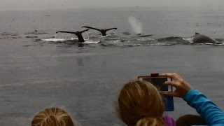 9.30.15 Breaching Humpback Whales & Common Dolphins #Monterey #Travel #Adventure