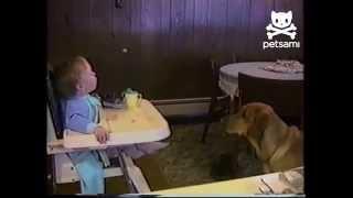 Ребенок скармливает свою еду собаке))