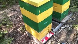 mudsongs.org: General Beekeeping Update (Sept. 2014)