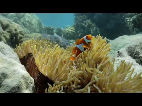 Marine Conservation on the Great Barrier Reef - below deck