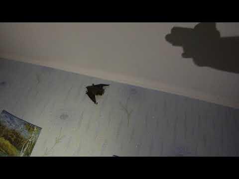 Вопрос: Если в погреб залетела летучая мышь, как её выгнать?