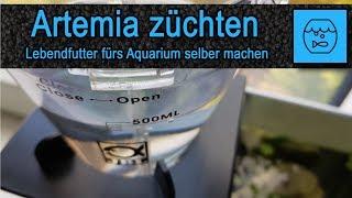 Artemia züchten und verfüttern - Lebendfutter selber machen - Fischfutter - JBL Artemio Set