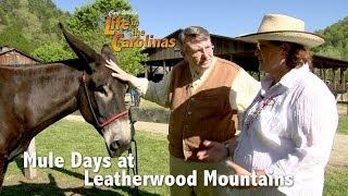 Mule Days at Leatherwood Mountains