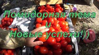 Помидорная тема и новые успехи)))