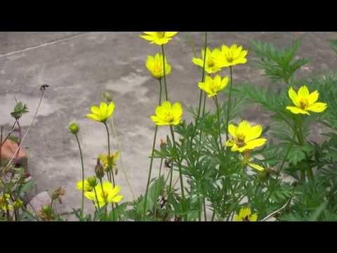 Ong và bướm bên hoa vàng
