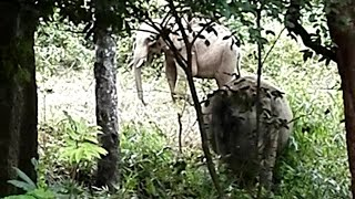 See how enjoying Wild male and female elephants inside the walayar forest range