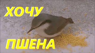 """Птицы знают толк в крупах """"ПШЕНО"""".  Едят все!"""