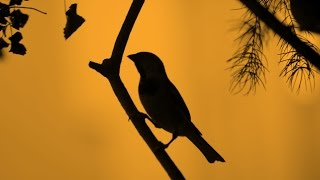 World Sparrow Day | पर्यावरण को बचाने के लिए 'विश्व गौरैया दिवस' जरूरी