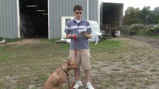Dog Training, Feeding & Care : How To Feed Your Dog A Balanced Diet