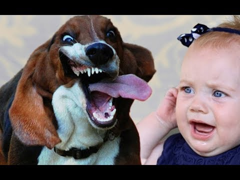 Cute Hound Playing with Baby! Dogs With Babies