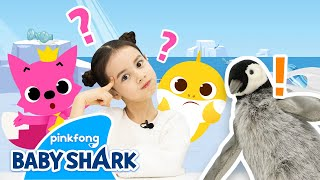 Let's Go to the South Pole with Baby Shark! | Baby Shark Toy Show | Toy Review | Baby Shark Official