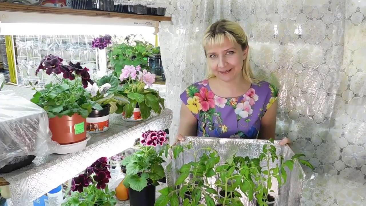 Размножение Хосты семенами. Planting seeds hosts. - YouTube