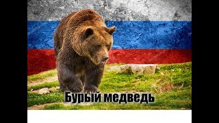 Бурый медведь. Интересные факты.