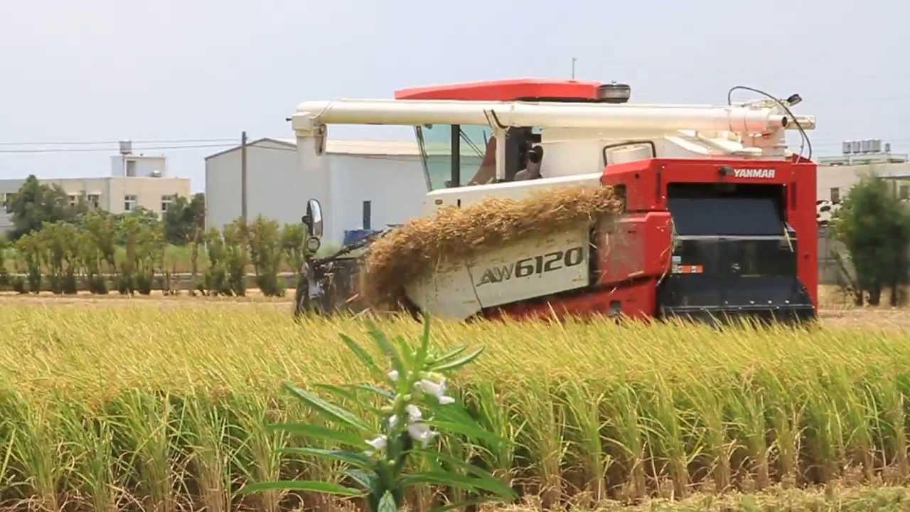 20130706-臺灣-彰化縣線西鄉-一期稻作收割-使用YANMAR AW6120 - YouTube