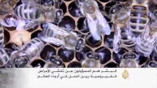 البشر مسؤولون عن تفشي الأمراض الفيروسية بين النحل