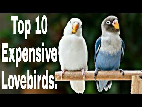 TOP 10 EXPENSIVE LOVEBIRDS.