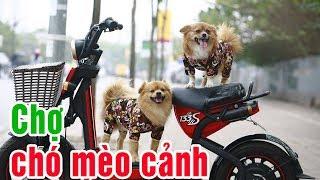 Bất ngờ chú chó khôn như chó nghiệp vụ tại chợ chó mèo Hà Đông