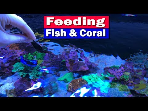 Feeding Fish And Coral In Your Saltwater Aquarium