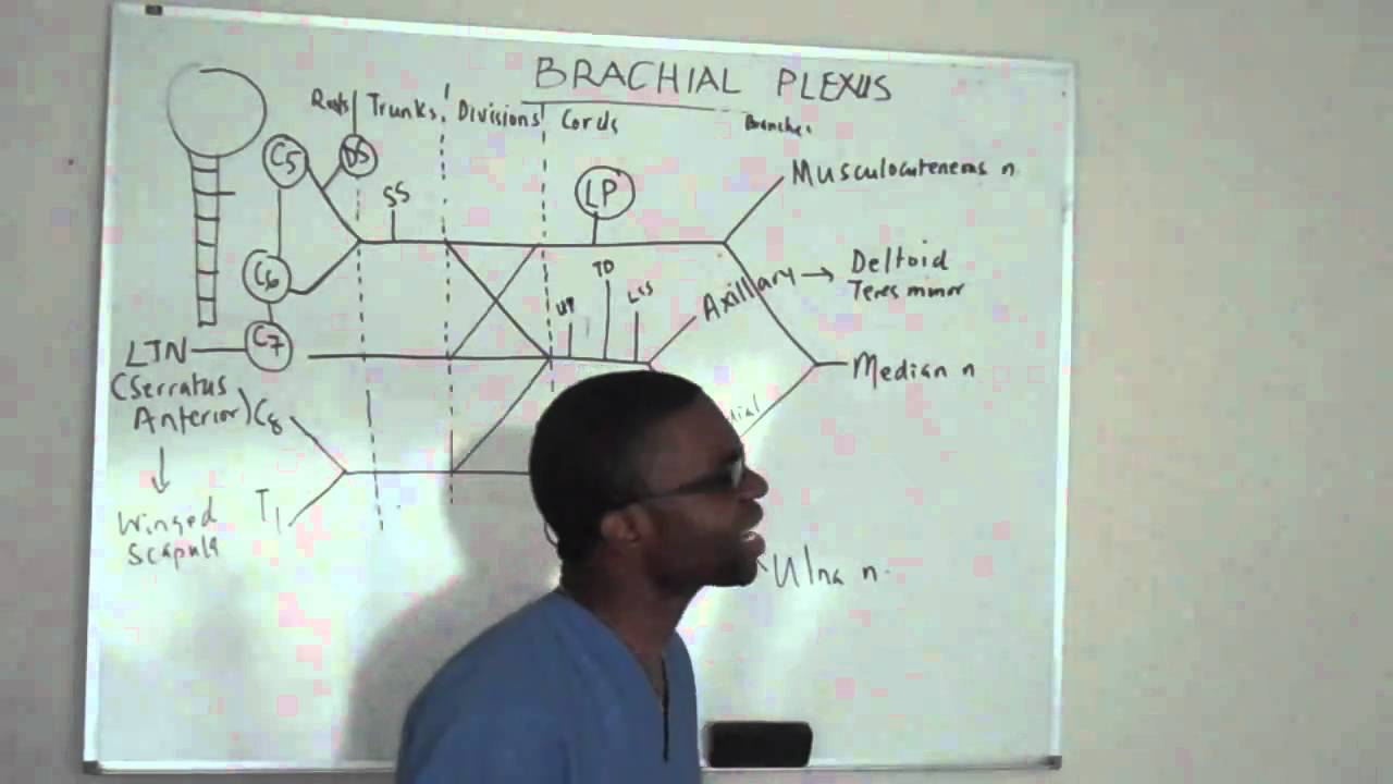 Brachial Plexus Made Ridiculously Simple Part 3 Lecture Youtube