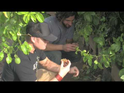 TAKING IT TO THE ROOTS! ORGANIC FARMING PT1