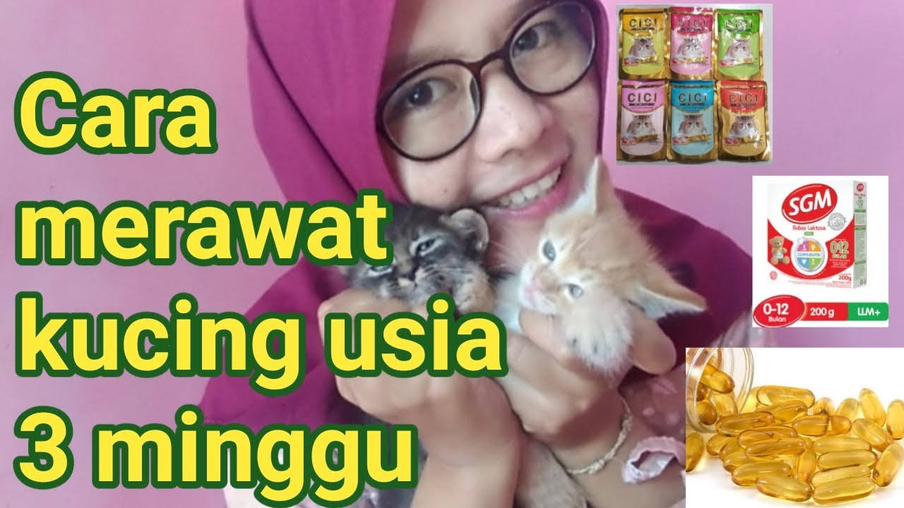 Cara Merawat Kucing Usia 3 Minggu Tanpa Induk Youtube