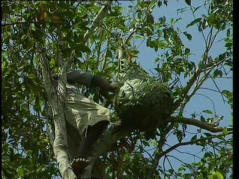 Découverte du Monde - Pemba, l'île aux épices