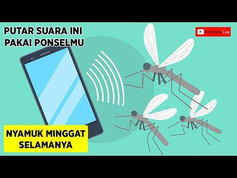 Assalamu Alaikum wr.wb video Kali ini Adalah GAK sAMPAI 1 MENIT !!, Nyamuk Hilang Selamanya Cuma den.
