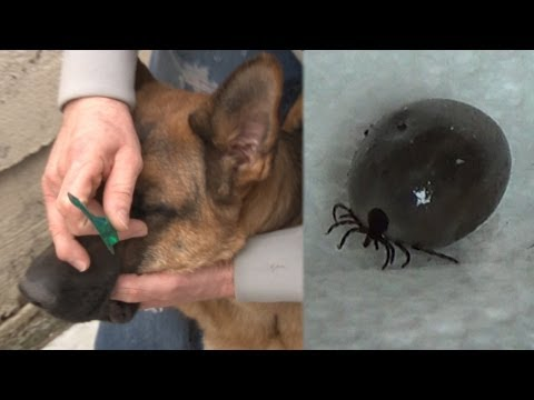 How To Remove Tick