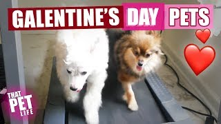 Galentine's Day Pets 💁🏼‍♀️🐈💘 | Try Not to Aww Challenge