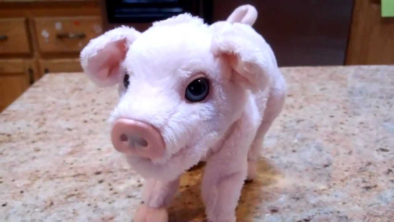 Cute Baby Pig Wallpaper Furreal Newborn Piglet Oinks Amp Wiggles Nose Youtube