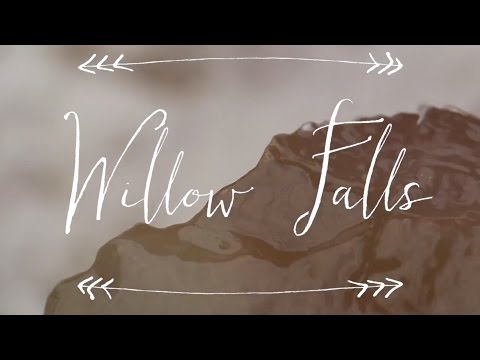 short film // willow falls