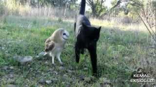 Kedi ve Baykuşun Dostluğu