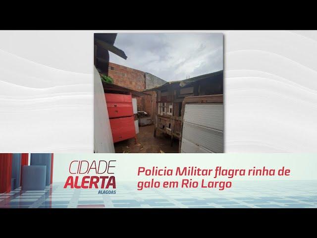 Policia Militar flagra rinha de galo em Rio Largo