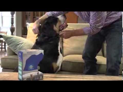 מעולה קולר נגד נביחות לכלב גדול - PetSafe - מועדון הכלבים - YouTube XI-61