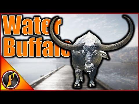 Water Buffalo Guide! | theHunter Call of the Wild