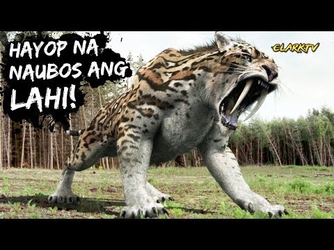 10 Hayop na Naubos ang Lahi PART 1 - Ikakagulat mo! (REUPLOAD)