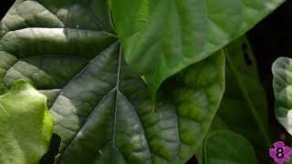 Singapore Botanic Gardens - Healing Garden