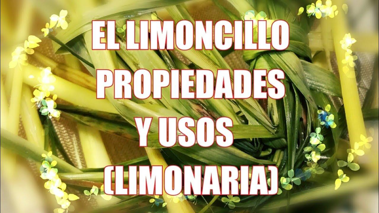 El Limoncillo Limonaria Youtube