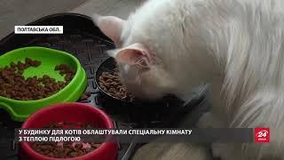На Полтавщині вирощують екзотичну породу котів