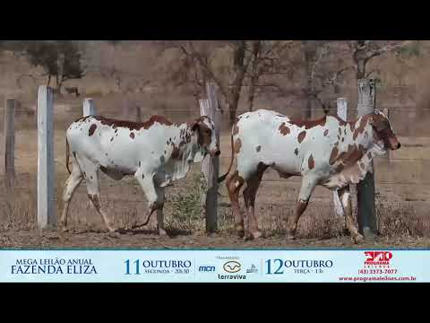 LOTE 245
