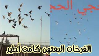 الفرخات البعتهن كامت أطير .... يم اخونة ومتابعنة بالتوفيق 🌹🌹