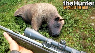 Polowanie na żubry | theHunter: Call of the Wild (#41)