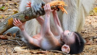 Comely baby Mary can walk and climb some small trees - Very lovely baby - tv daily animals